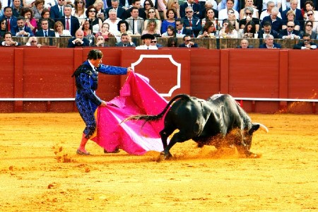 Bull fighting tickets