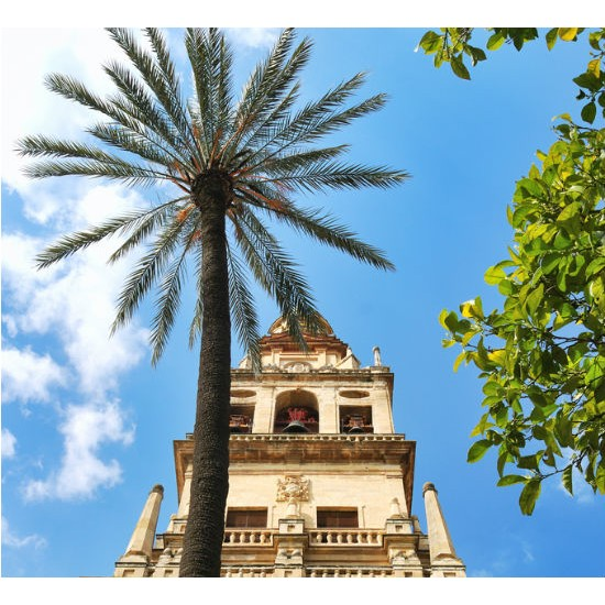 Córdoba tour by train AVE (full day)