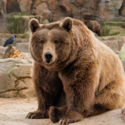 Zoo Aquarium Madrid: Tickets + Transfers