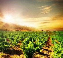 Visit and Wine Tasting in Ribera del Duero