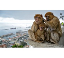 GIBRALTAR, SIGHTSEEING TOUR & SHOPPING